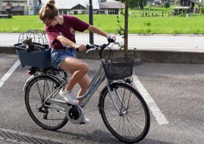 noleggio bici con cestino porta cani Cicli Bettega Primiero